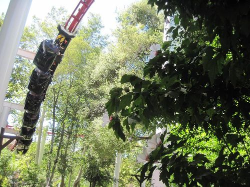 Ninja (Six Flags Magic Mountain) trees.jpg
