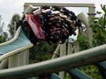 Colossus (Thorpe Park) barrel roll.jpg